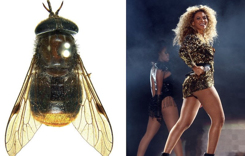 Beyonce horse fly