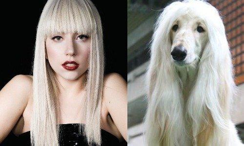If singers were animals