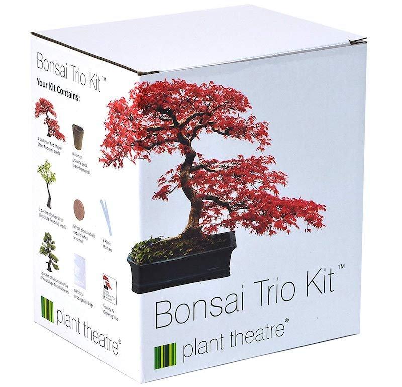 Grow Your Own Bonsai Tree Secret Santa Gift Idea
